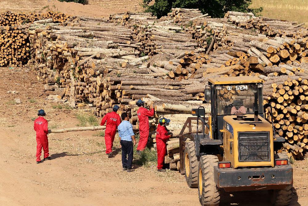 از چه چوبی برای ساخت پالت چوبی استفاده می شود؟